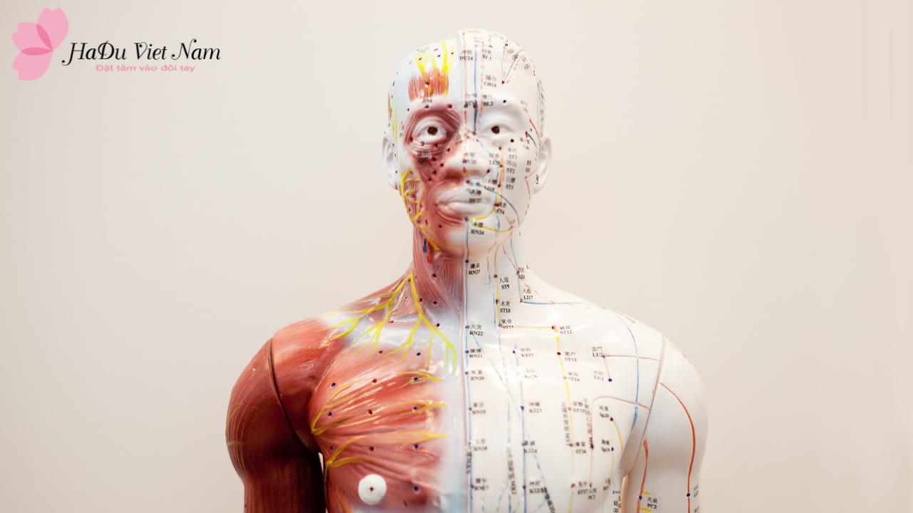 Bảng tra cứu các đường kinh trên cơ thể